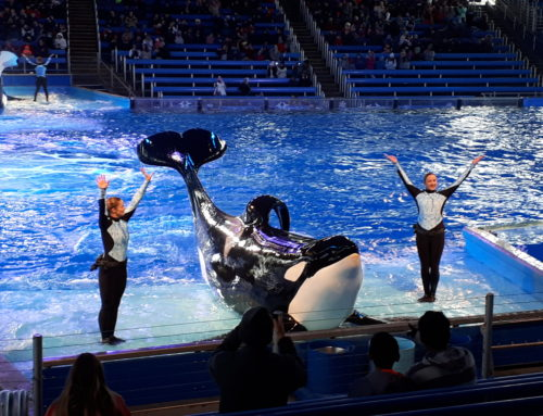 SeaWorld – San Antonio, Texas
